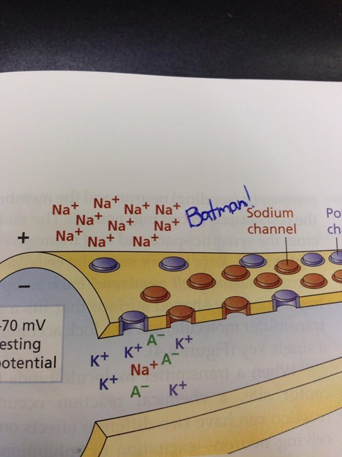 sodium batman Chemistry funny - 8219059200