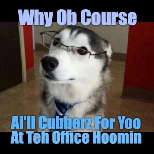 cute dogs glasses funny work - 8219186688