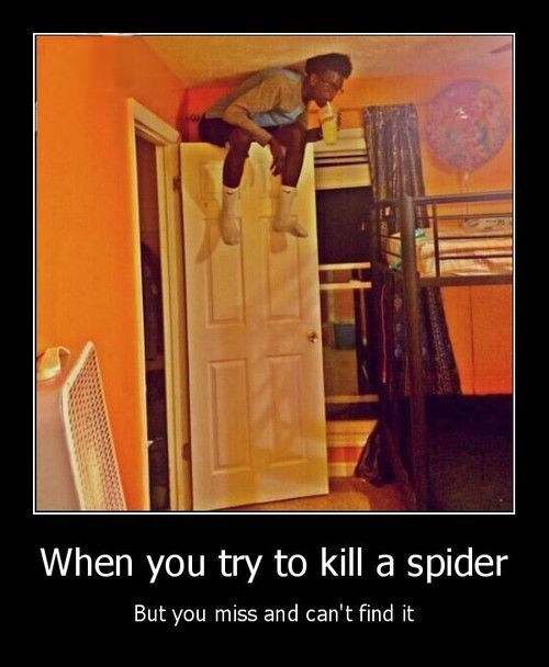 scary wtf bad idea spider funny - 8219243520