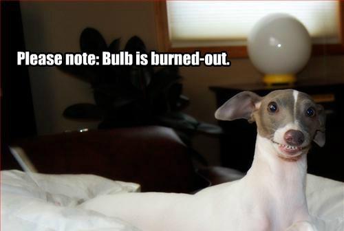 Cats dogs stupid lightbulb - 8219252224