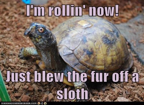 sloths funny turtles slow