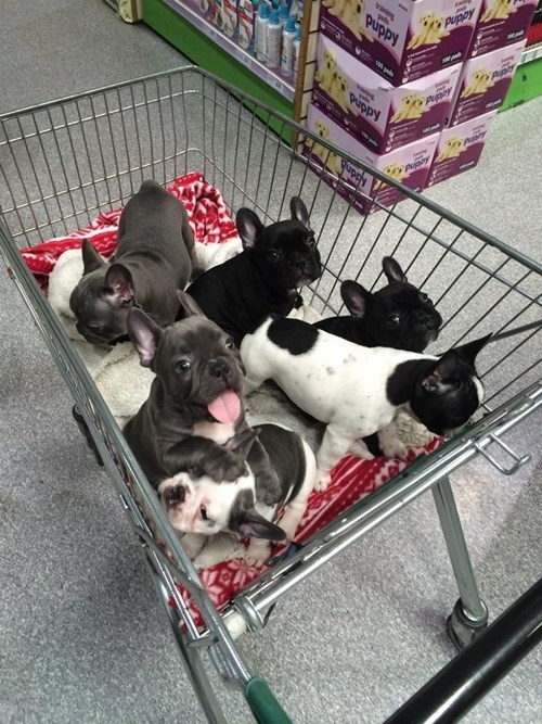 cute grocery store puppies shopping - 8219513856