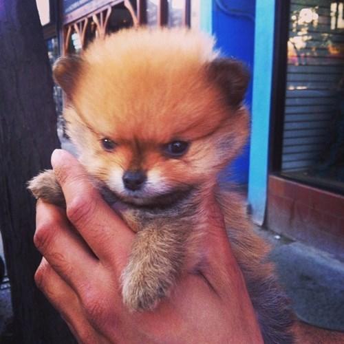 cute Fluffy puppies - 8219525376