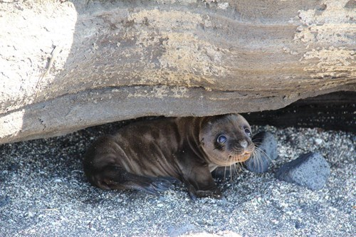 Babies,cute,summer,seals
