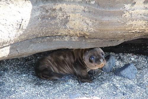 Babies cute summer seals - 8219528960