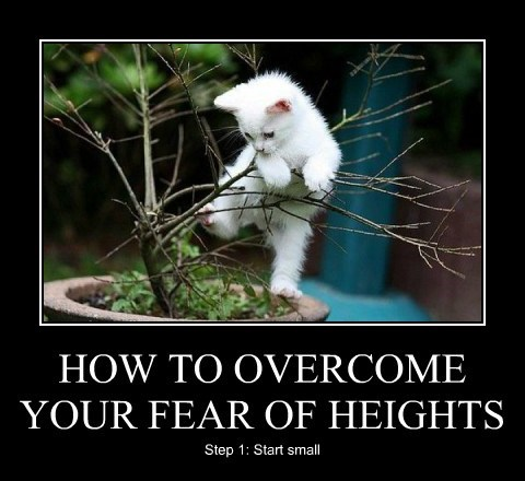 cat fears heights cat memes - 8219645184