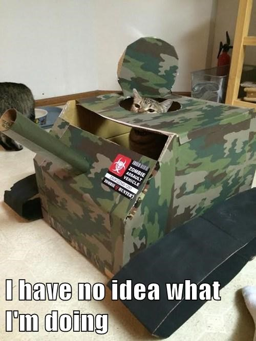 military cute Cats - 8220017920