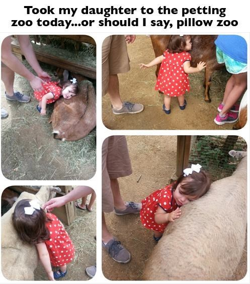 petting zoo Pillow kids cute parenting