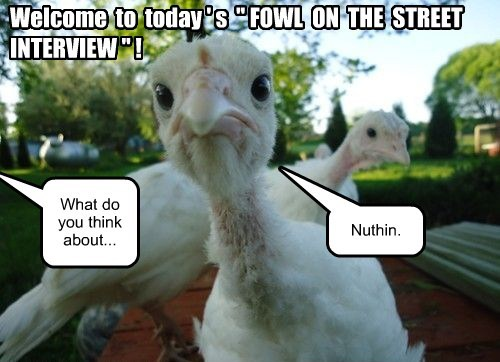 """Welcome to today ' s """" FOWL ON THE STREET INTERVIEW """" ! What do you think about... Nuthin."""