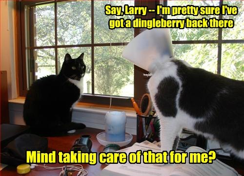 Say, Larry -- I'm pretty sure I've got a dingleberry back there Mind taking care of that for me?