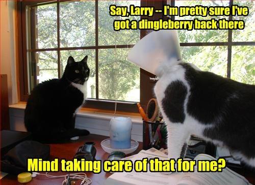 Cats dingleberry cone of shame - 8220345856