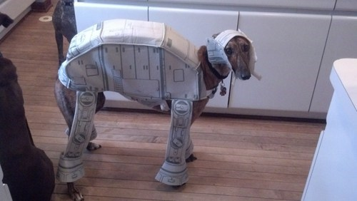 costume dogs star wars