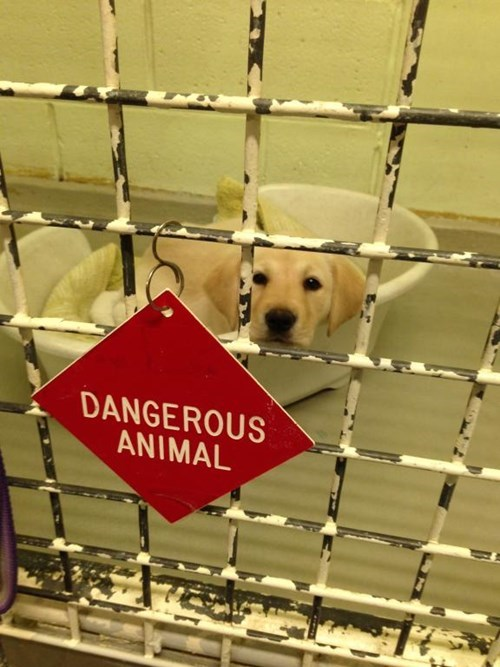 cute dogs dangerous shelter - 8220578048
