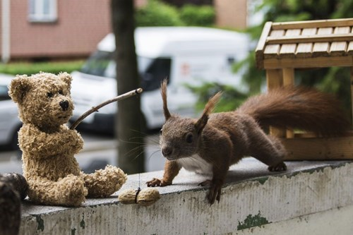 cute,fishing,squirrels,teddy bear