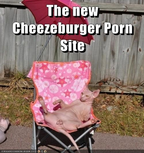 Cheezburger Image 8220606208