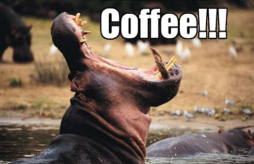 coffee hippos funny - 8220689408