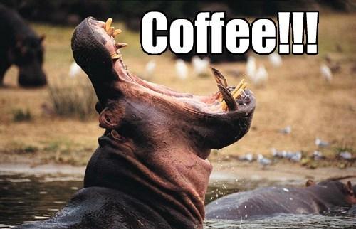 coffee hippos funny - 8220689408