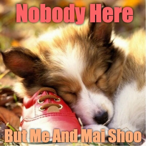 cute dogs shoes sleeping - 8221138432