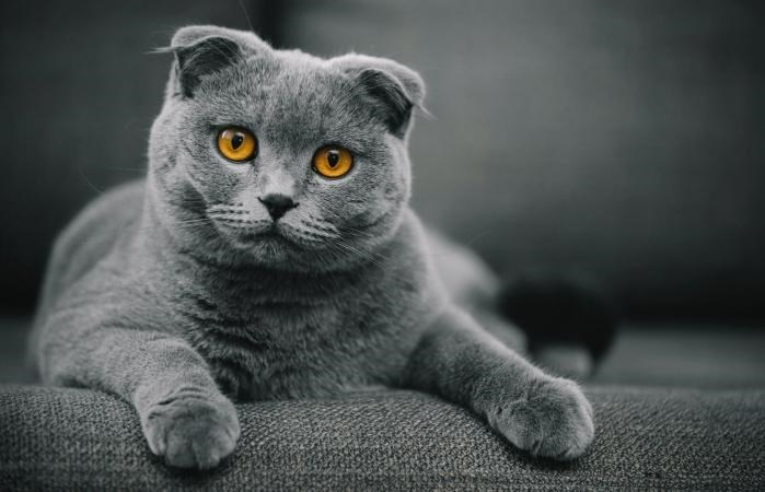 Cute cats by breed