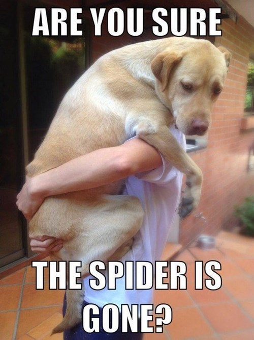 dogs spiders scared