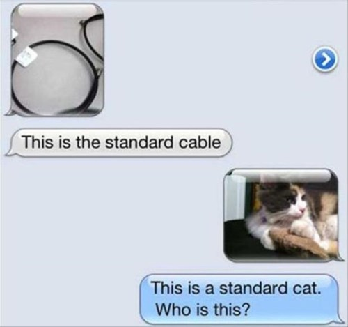 text Cats funny