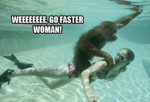 cute swimming apes - 8221672960
