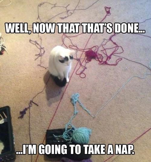 yarn mess Cats playing - 8221704192