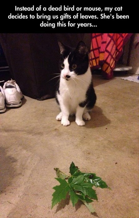 cute vegetarian leaves hunting Cats - 8221728512