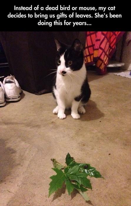 cute vegetarian leaves hunting Cats - 8221728512