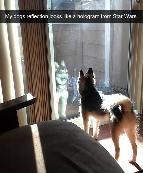 dogs,star wars,hologram,reflection,cute