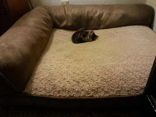cute,beds,kitten