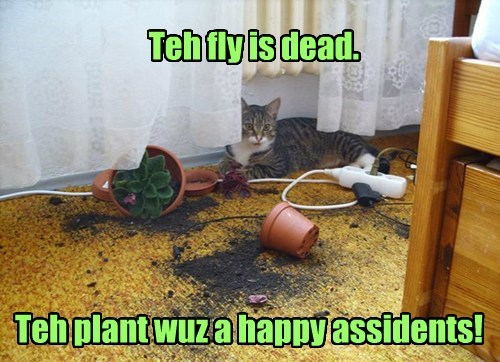 Teh fly is dead. Teh plant wuz a happy assidents!