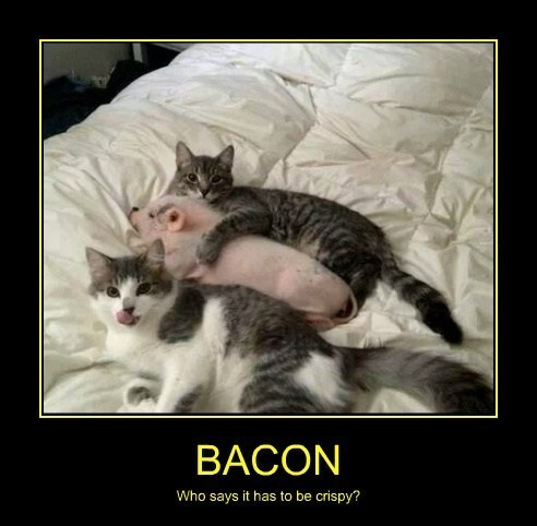 Cats,bacon,funny,pig
