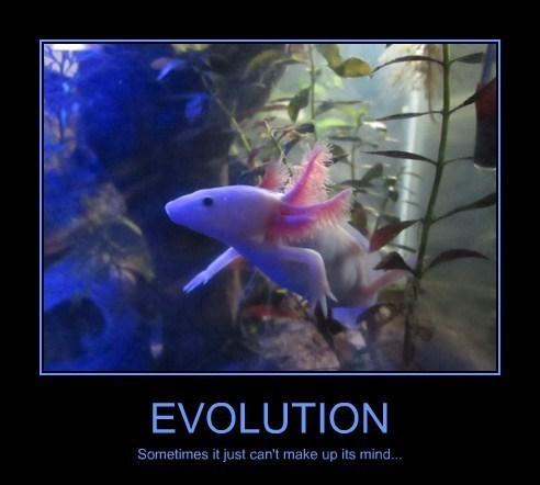 evolution,funny,wtf,salamander