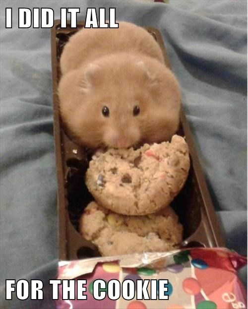 cookies,hamsters,steal