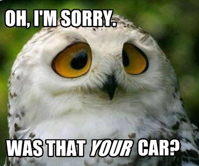 Sarcastic Owl Doesn't Care