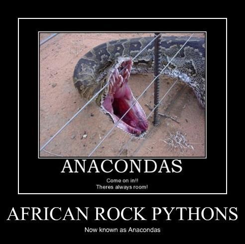 funny python snakes
