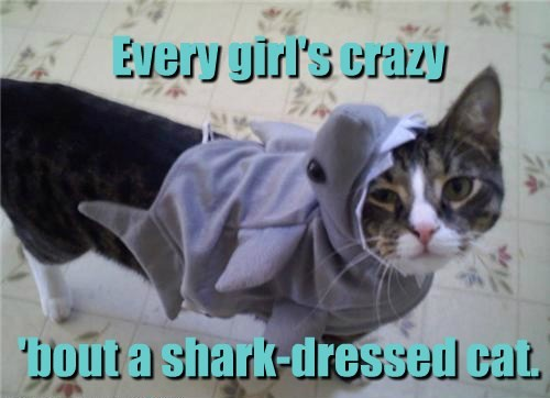 Every girl's crazy 'bout a shark-dressed cat.