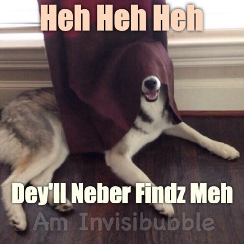 dogs,funny,hide