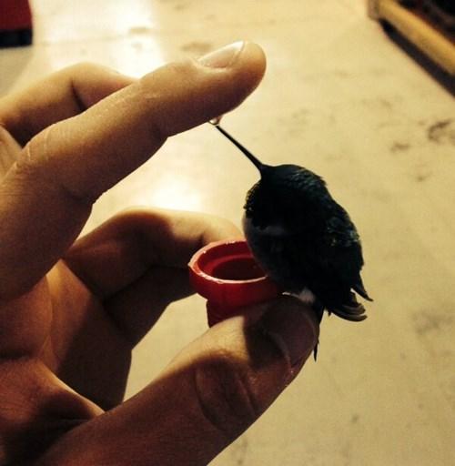 cute tiny hummingbird - 8223911936