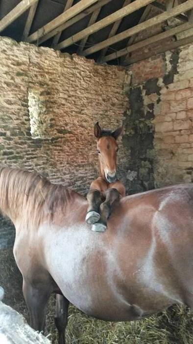 Babies cute foal horses - 8223913216