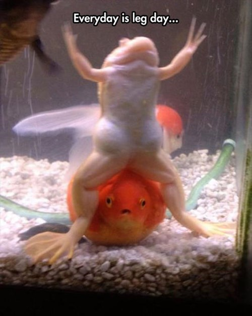 funny,frogs,lifting,legs