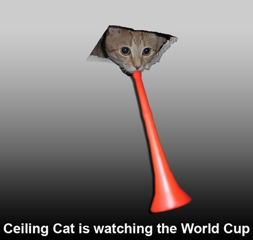 Cats,ceiling cat,world cup