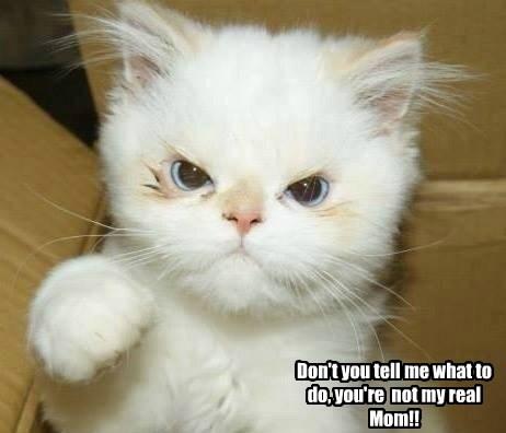 Cats children step parents - 8224103424