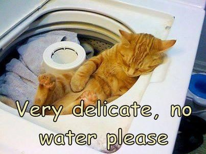 Very delicate, no water please