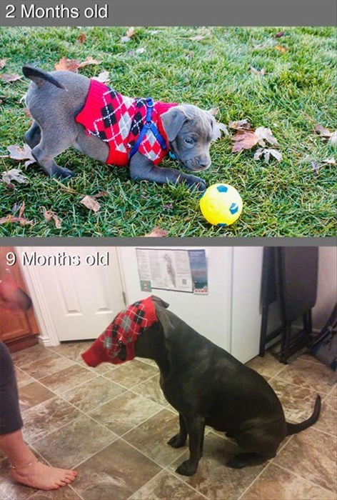 dogs,funny,growing up