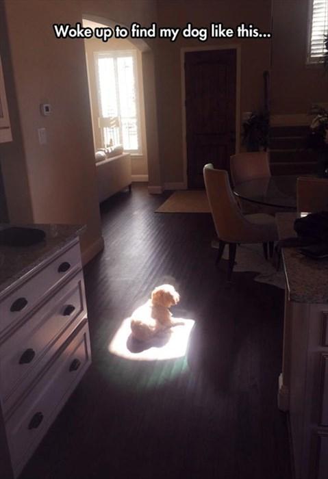 dogs funny sun - 8224545792
