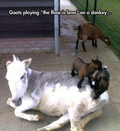 You Better Hoof it to the Top of That Donkey Rock!