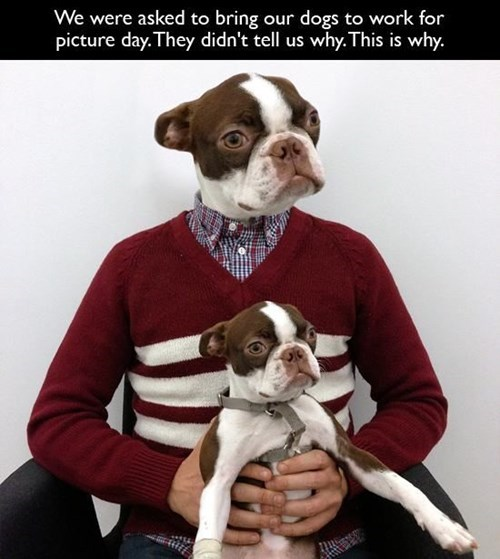dogs monday thru friday work prank - 8224577792