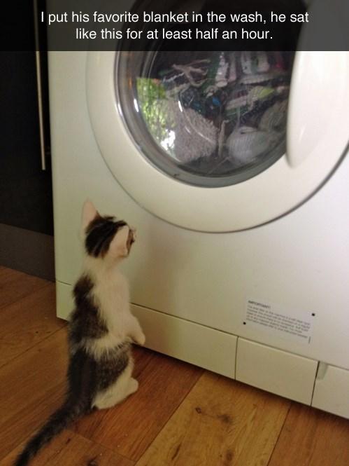 blankets Cats laundry - 8224586496